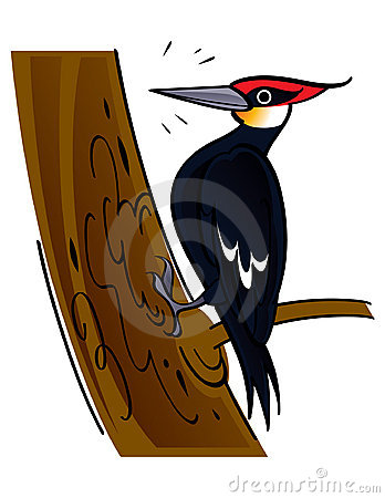 Woodpecker Isolated Branch Stock Photos, Images, & Pictures.