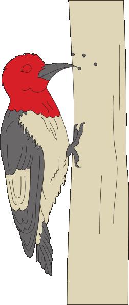 Pecking Woodpecker Clip Art at Clker.com.