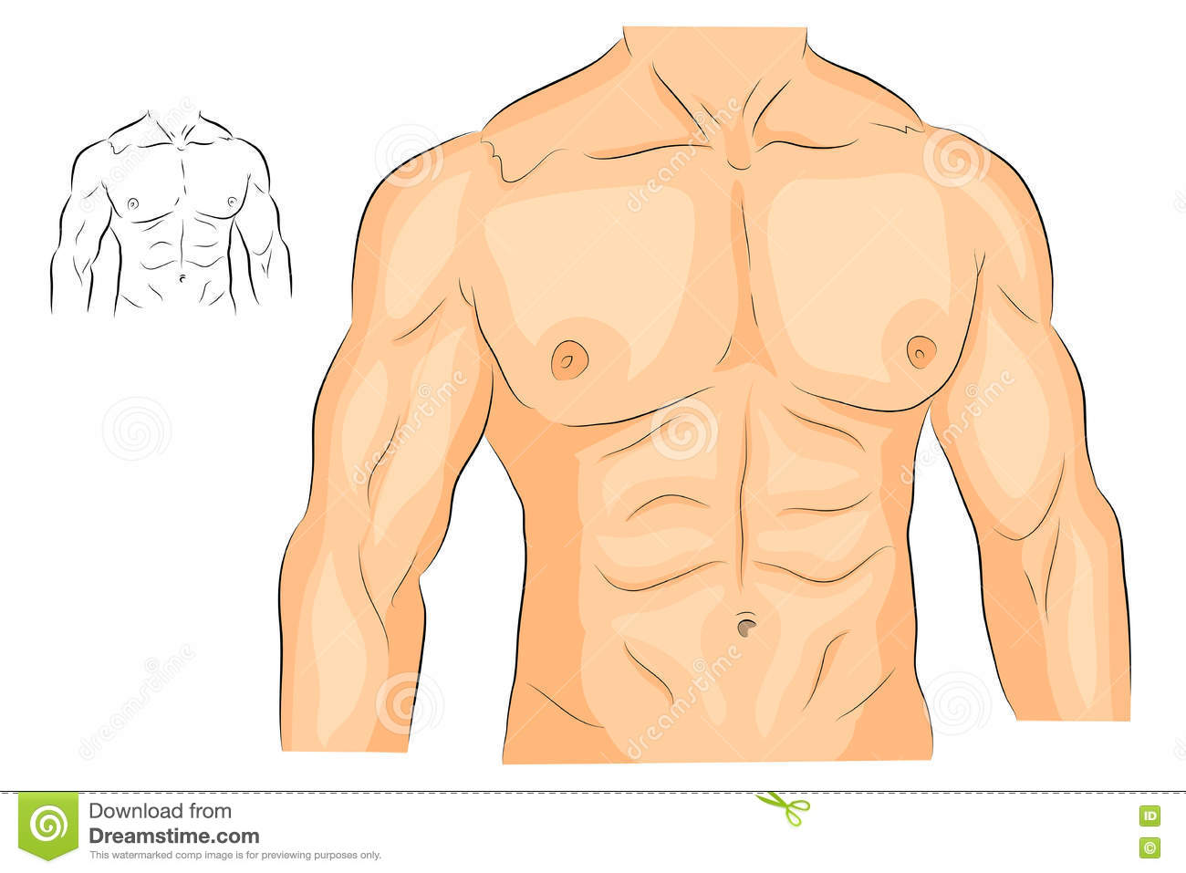 Men S Body Arms Shoulders Chest And Abs. Stock Vector.