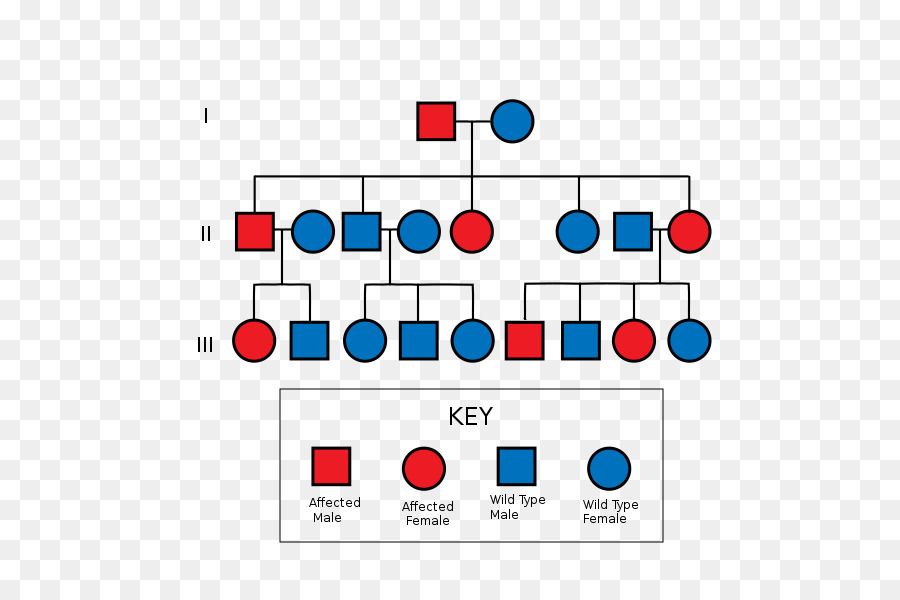pedigree chart clipart Pedigree chart Diagram Genetics.