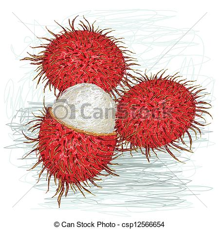 Clipart Vector of rambutan peeled.