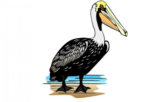 Pelican clip art Vector.