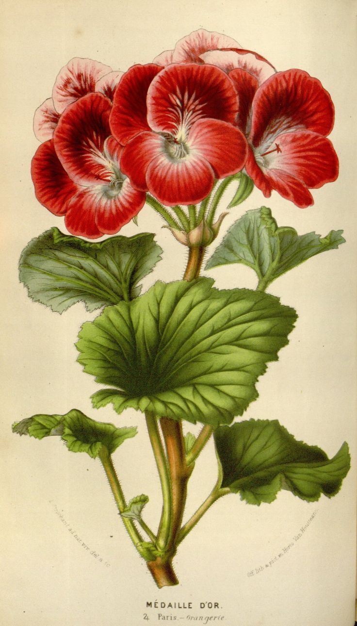 1000+ images about Vintage Flover and Animal on Pinterest.