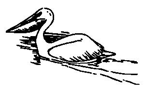 Pelecanidae Clip Art Download.