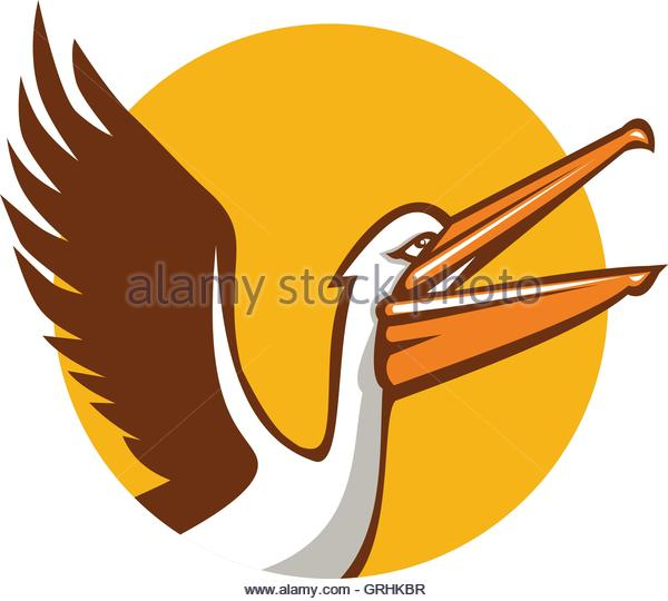 Pelecanidae Stock Vector Images.