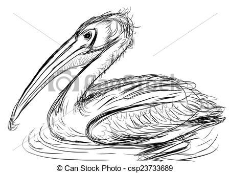 Stock Illustration of hand draw bird Pelecanidae cg painting.