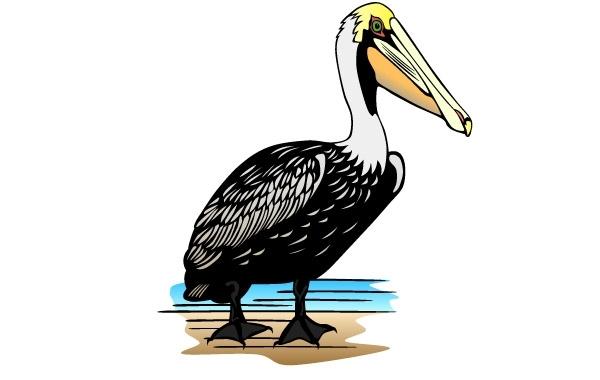 Pelican clip art.