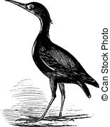 Pelecaniformes Stock Illustrations. 9 Pelecaniformes clip art.