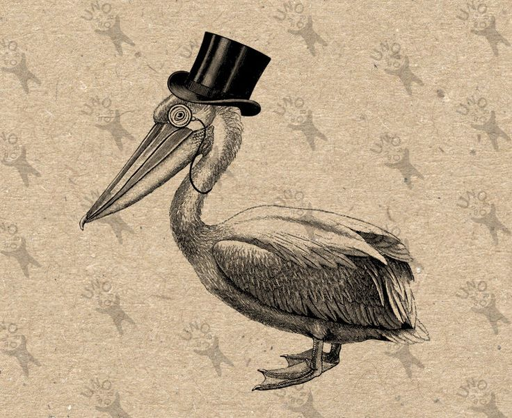 1000+ images about Pelicans on Pinterest.