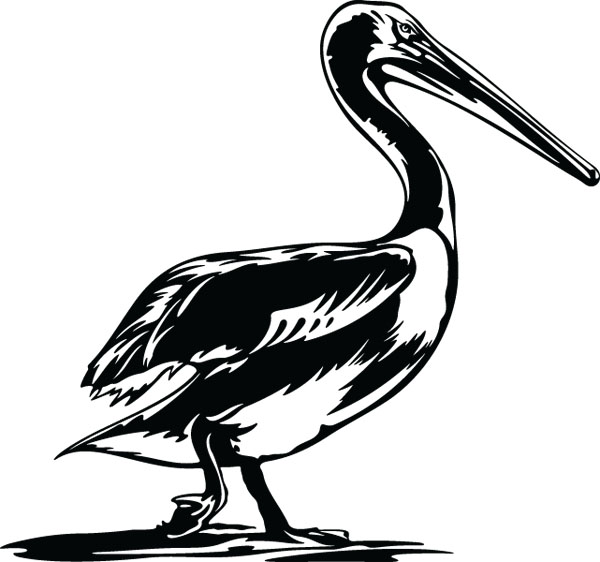 Black Pelican Bird Clip Art Graphic For Engraved Products.