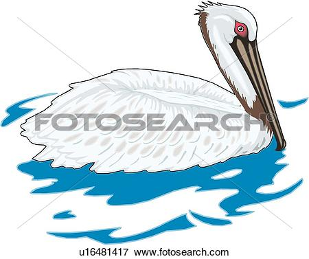 Clip Art of Brown Pelican u16481417.