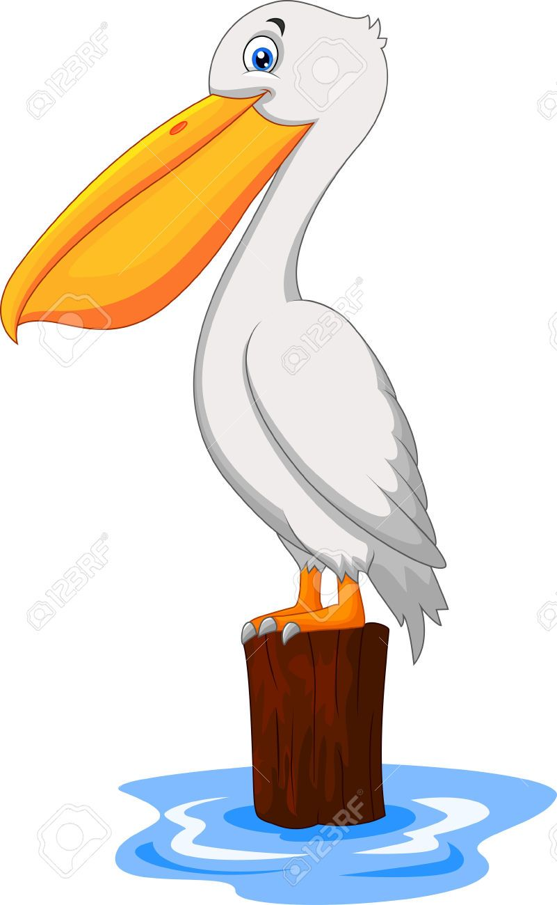 Pelican Cliparts, Stock Vector And Royalty Free Pelican.