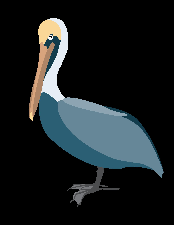 Pelican 3 Clip Art.