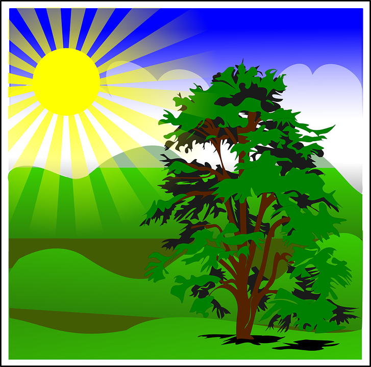 Free vector graphic: Tree, Nature, Spring, Sun, Sunshine.