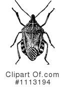 Pentatomidae Clipart #1.
