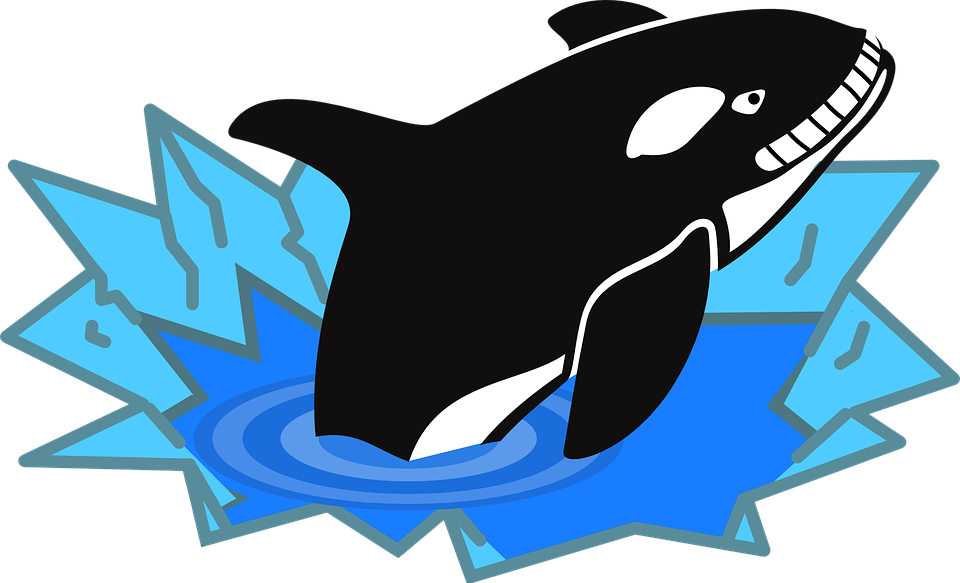Free vector graphic: Orca, Fish, Penguin Enemy, Polar.