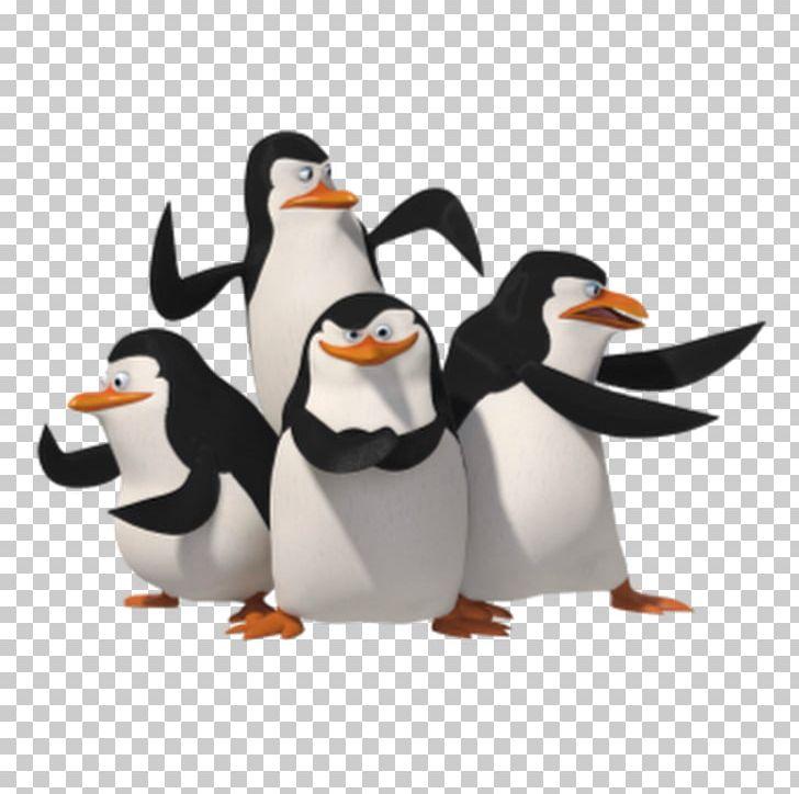 Penguin Skipper Madagascar PNG, Clipart, Animals, Animation.