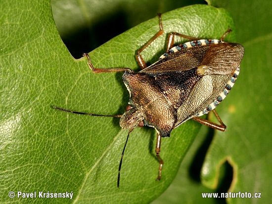 1000+ ideas about Forest Bugs on Pinterest.