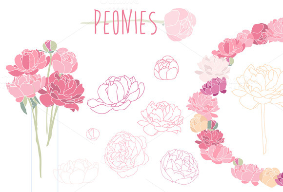 Flower peonies.