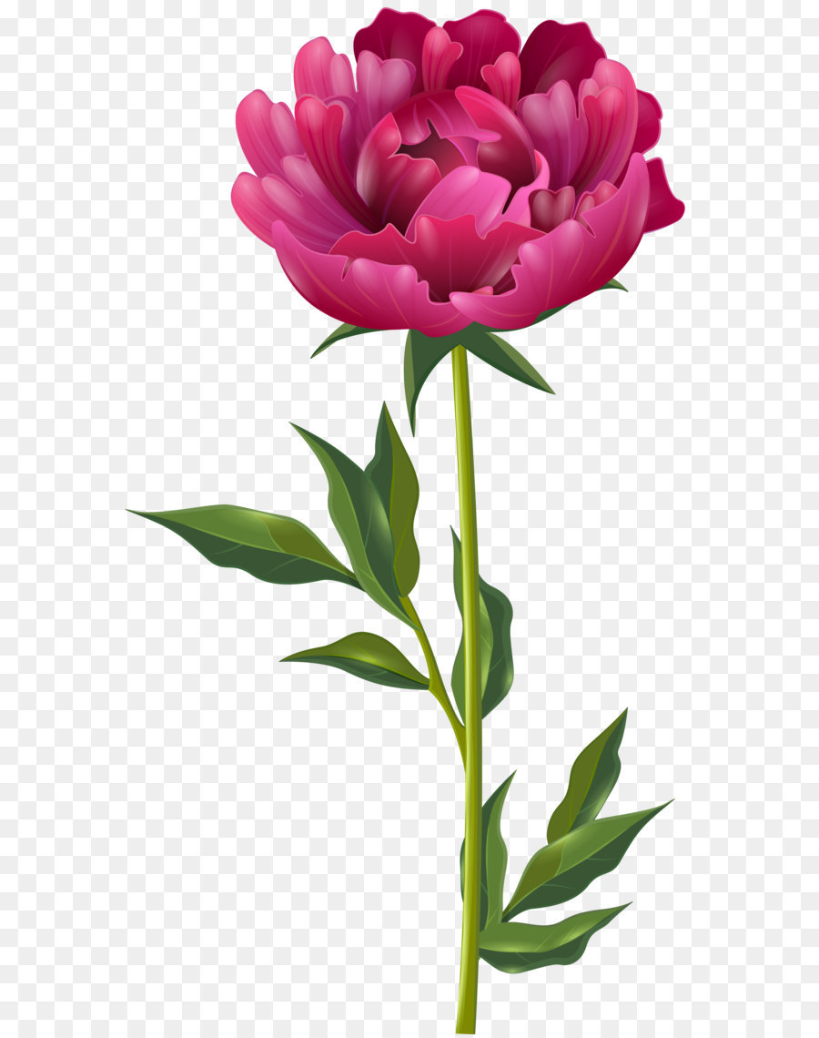 Pink peony clipart 7 » Clipart Station.
