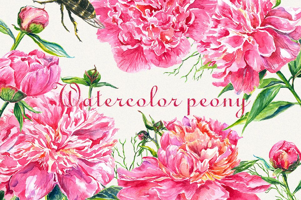 Peony clipart, Peonies flower clipart, floral elements.