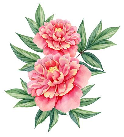Peony flower clipart » Clipart Station.