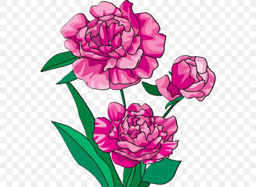 Peony Bai Mudan Paeonia Officinalis Pink Flowers Clip Art.