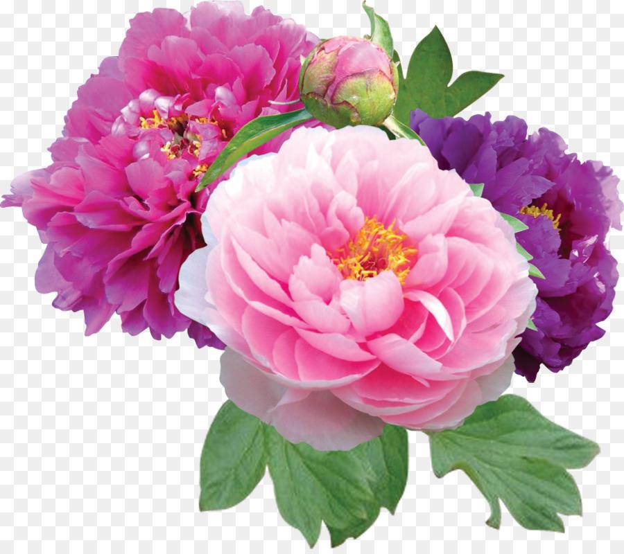Black Pink Rose.