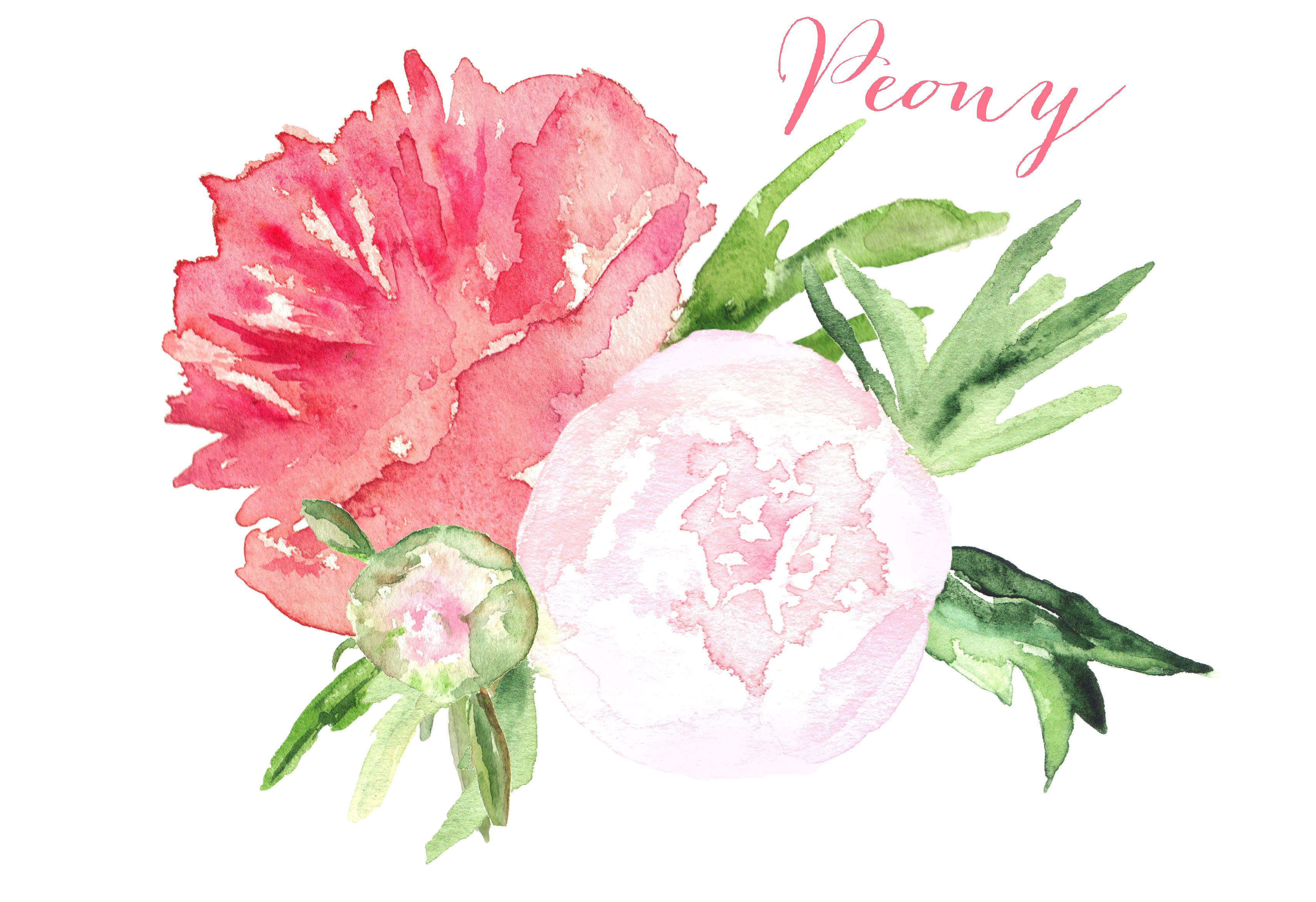 Peony set watercolor clip art ~ Illustrations on Creative Market.