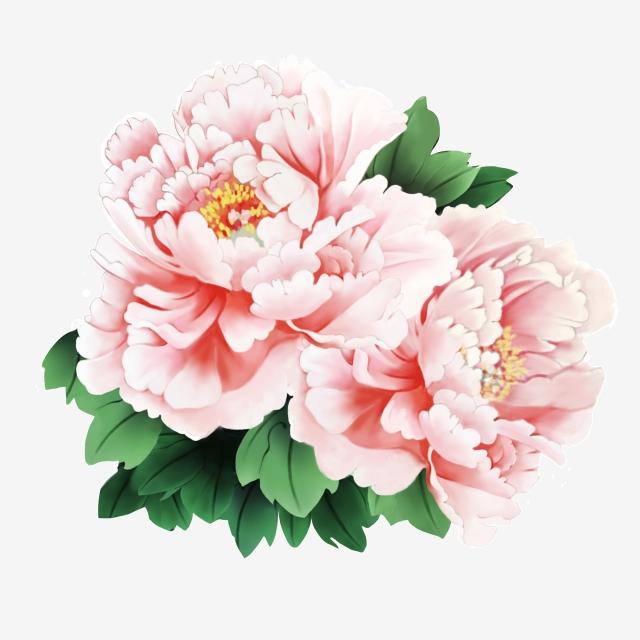 Peony Flower Vector Illustration Hd, Peony Flower Vector, Hd.