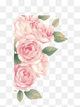 Peonies PNG Images.