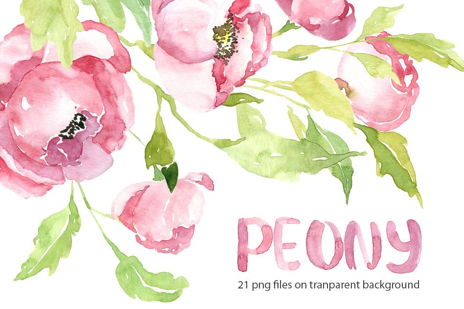 Pink watercolor peony PNG collection.