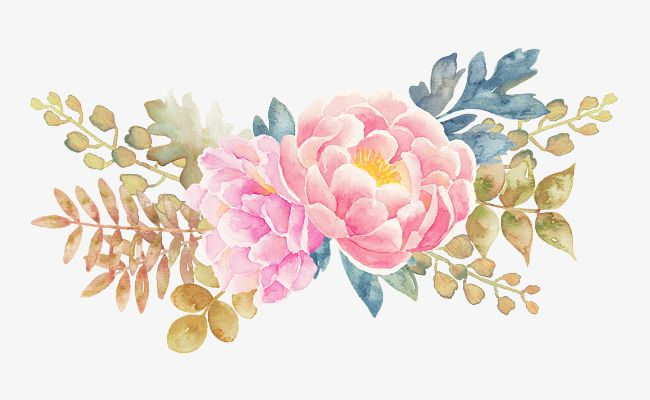 Peony Flower Watercolor Painted Floral Elements, Flower.