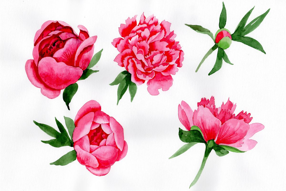 Tender wildflower pink peony PNG watercolor set.