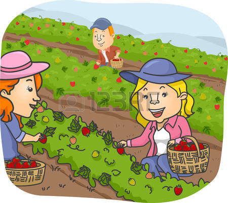 81,637 Crops Stock Illustrations, Cliparts And Royalty Free Crops.