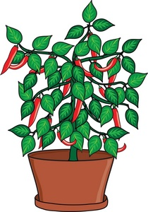 Growing Plant Clipart.