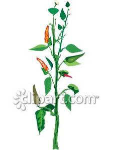 Plant Growing In a Garden Royalty Free Clipart Picture.