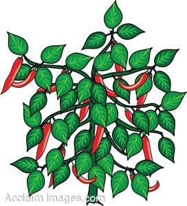 Clip Art of a Chili Pepper Plant.