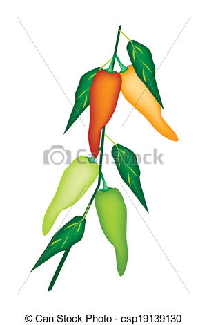 Vector of pepper plant.