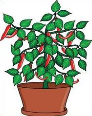 Free Chili Pepper Plants Clipart.