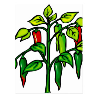 Pepper Plant Postcards.