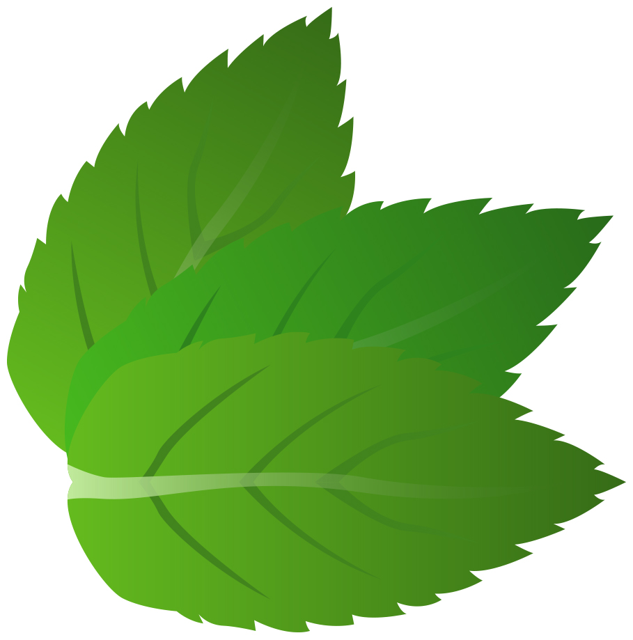 Peppermint leaf clipart.