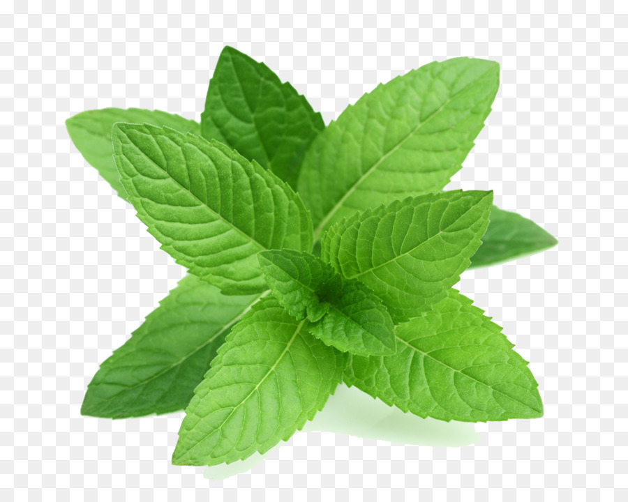 Mint Leaf clipart.