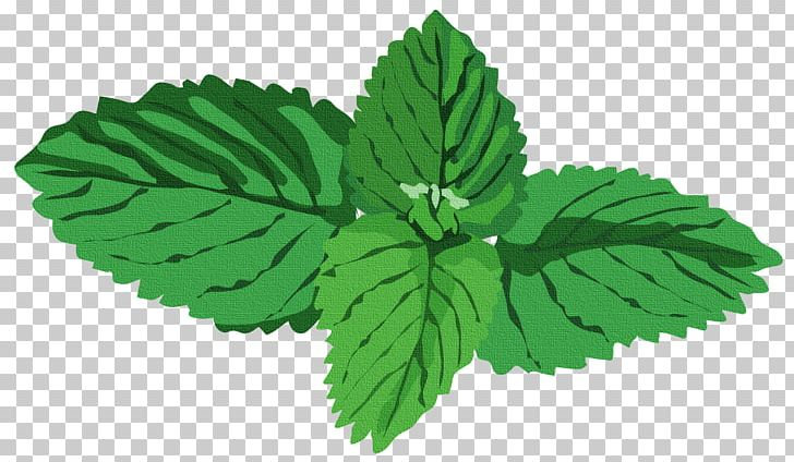 Peppermint Herb Water Mint Basil PNG, Clipart, Agonis.