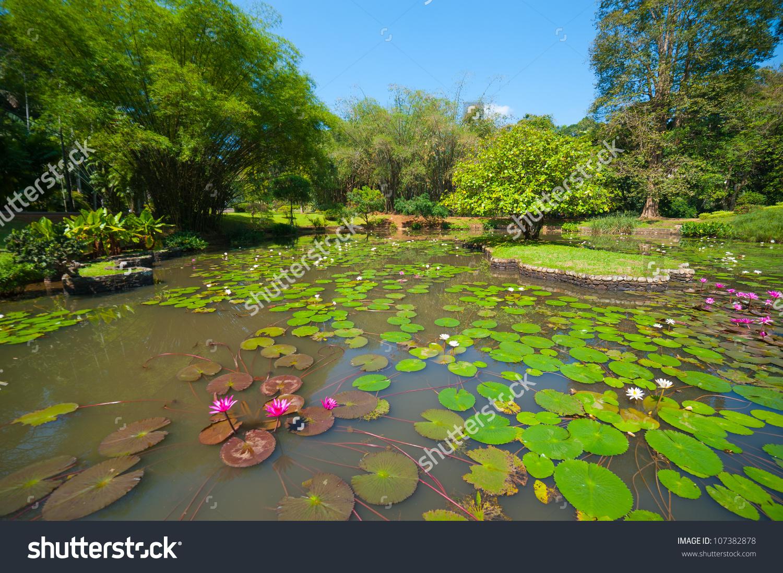 Botanical Garden Landscape Peradeniya Kandy Srilanka Stock Photo.
