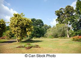 """Stock Photography of botanical Garden of Peradeniya, Kandy,""""Royal."""