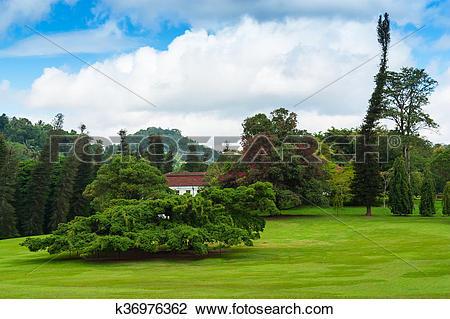 """Stock Photo of Botanical Garden of Peradeniya, Kandy,""""Royal."""