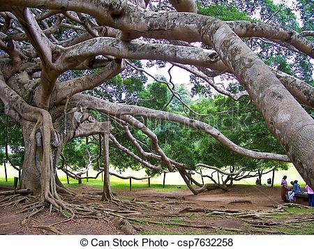 """Pictures of botanical Garden of Peradeniya, Kandy,""""Royal Botanical."""