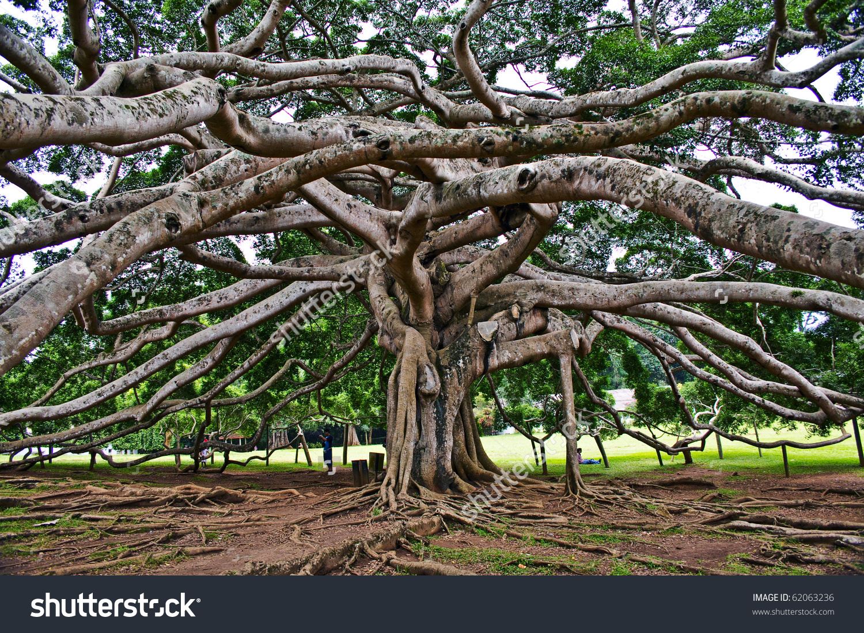 Botanical Garden Peradeniya Kandyroyal Botanical Gardens Stock.
