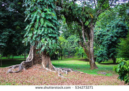 Royal Botanical Gardens Of Peradeniya Stock Photos, Royalty.